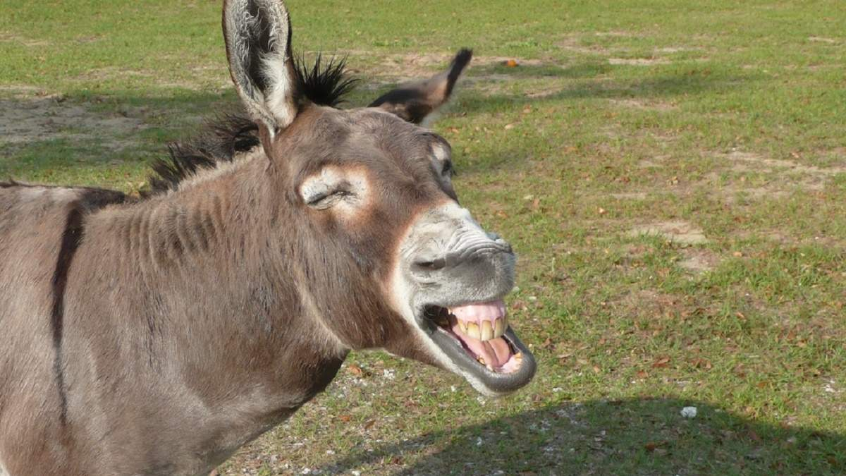 Чулки на телевизорах и еще 7 самых забавных розыгрышей на День смеха: веселая подборка