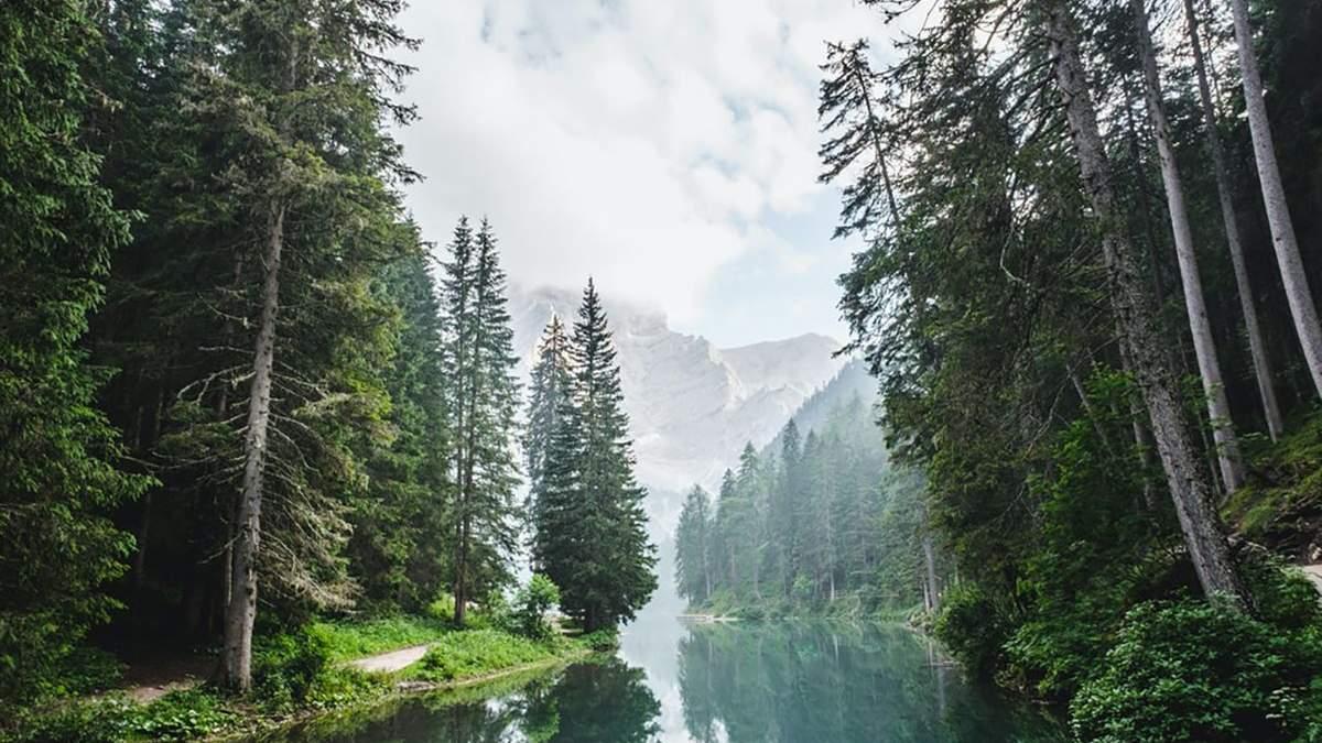 На природу – по інтернет-радіо: де можна безплатно послухати звуки лісу