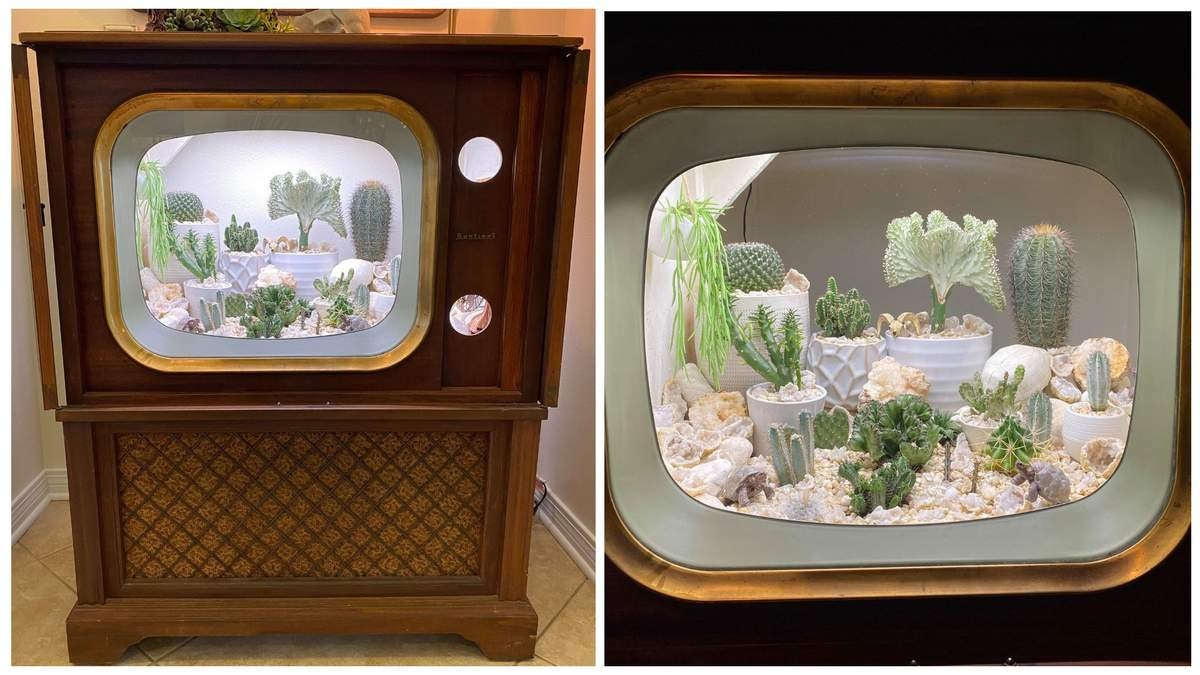 Американка превратила ретро-телевизор на террариум для кактусов