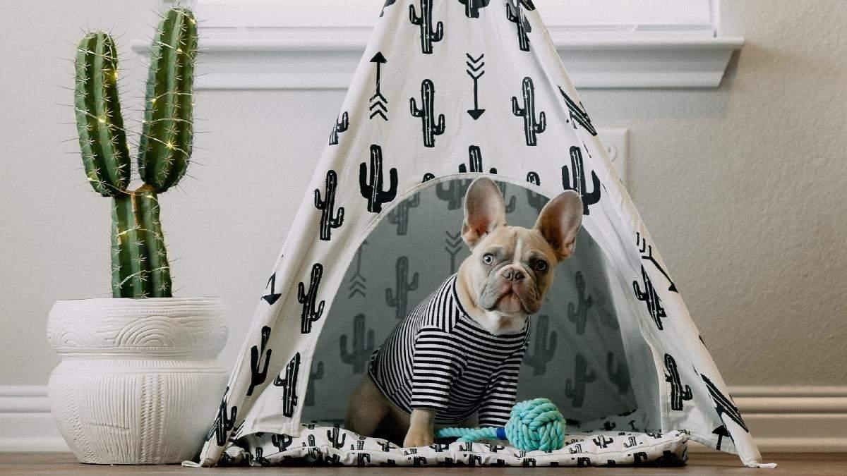 Як правильно прати одяг та аксесуари домашніх тварин: прості правила