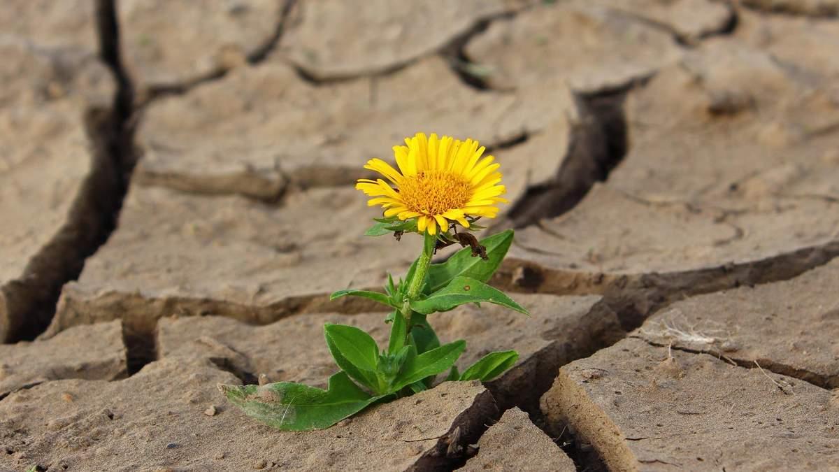 Насолодження самотністю: 8 порад для тих, хто живе сам - Ідеї