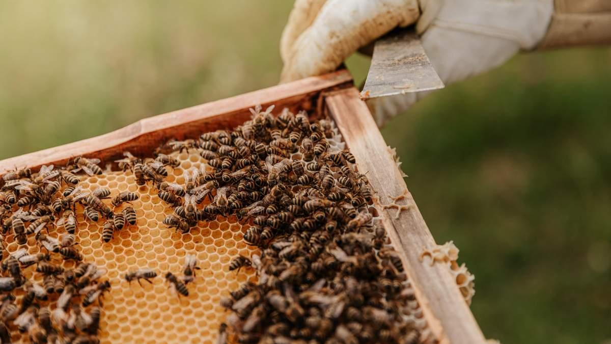 По сусідству з бджолами: в Англії готель облаштовує незвичайні будинки - Ідеї