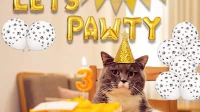 Как побаловать кота: 20 оригинальных подарков для домашнего любимца