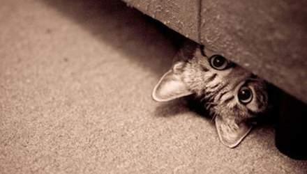 Тварини, які уявили себе агентами 007: кумедні фото