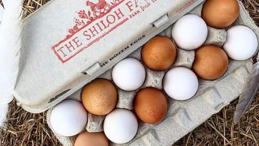 Фермер показав, як зберігати курячі яйця: навіть виробники роблять це неправильно