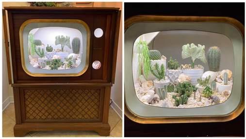 Американка зробила зі старовинного телевізора тераріум для кактусів: дивовижні фото