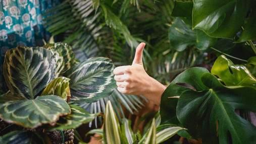 Чому варто мати кімнатні рослини: 7 переконливих причин