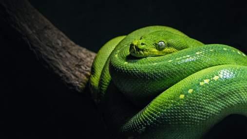 Всесвітній день змій: 10 маловідомих фактів про цих дивовижних плазунів