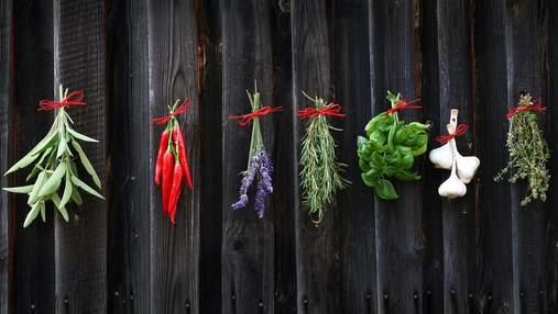 Ароматні спеції можна виростити вдома: пряна зелень завжди буде під рукою