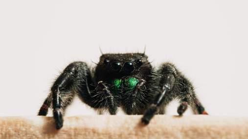 Плюшевые тарантулы: украинская рукодельница создает реалистичные подушки